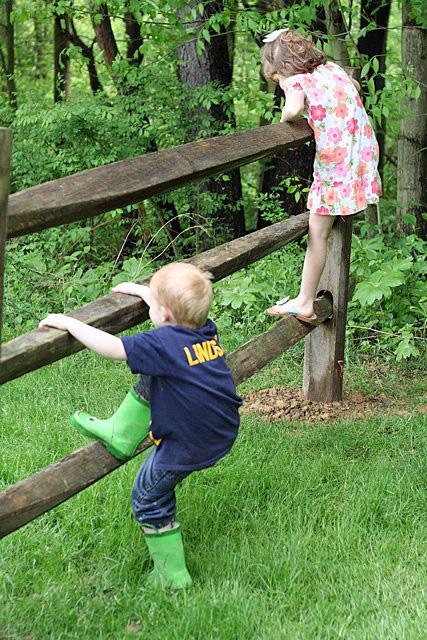 climbing fences gingercake