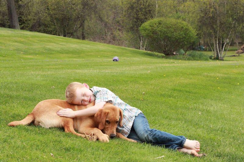 A Love Affair:  a Boy and his Dog
